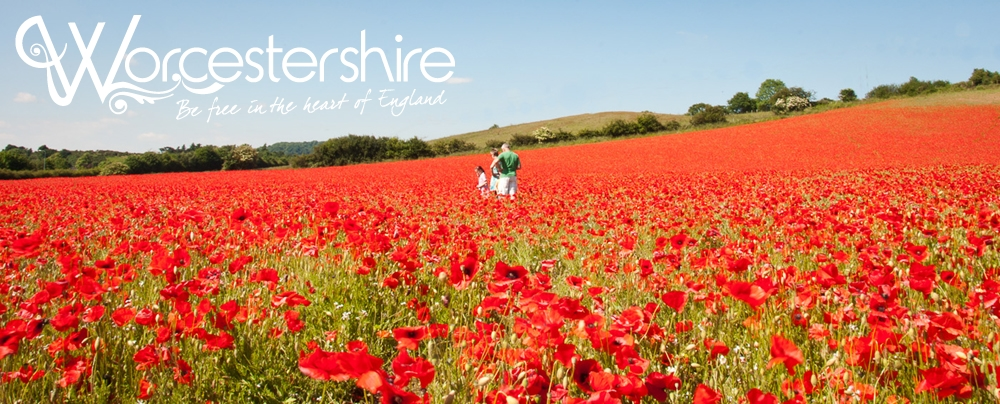 Poppies-at-Blackstone-Poppy-Field